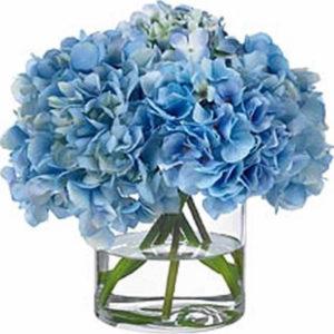 Blue Hydrangea Floral