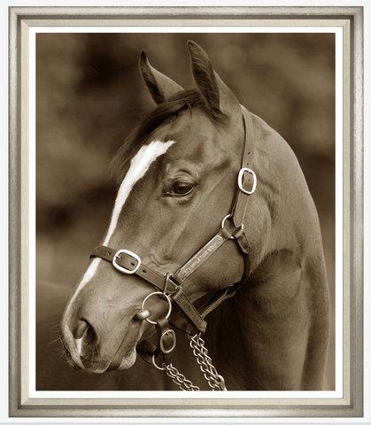 TGTAJ775-624L PRINT TEMPLETON HORSE WHITE FRAME