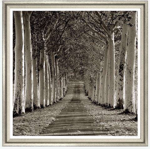 TGCWSJB38-924L PRINT, AVENUE OF TREES SILVER FRAME 51X43