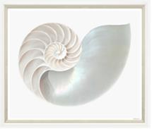 TGTAJ769-612L PRINT, WHITE NAUTILUS, WHITE FRAME, 51X43