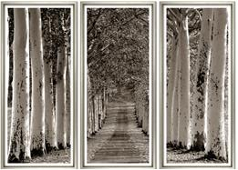 TGCWST37-624 PRINT, TRYPTIC, AVENUE OF TREES, SILVER FRAME SET OF THREE