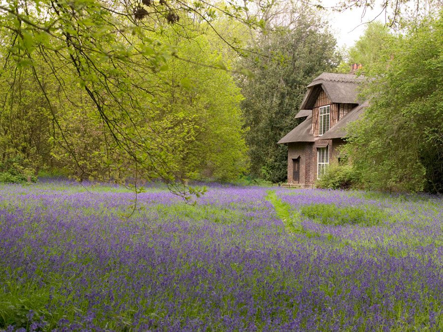 "From Kew's Facebook: ""London's oldest and finest bluebell woods can be found in the Conservation Area, in the grounds around Queen Charlotte's Cottage, at Kew."""