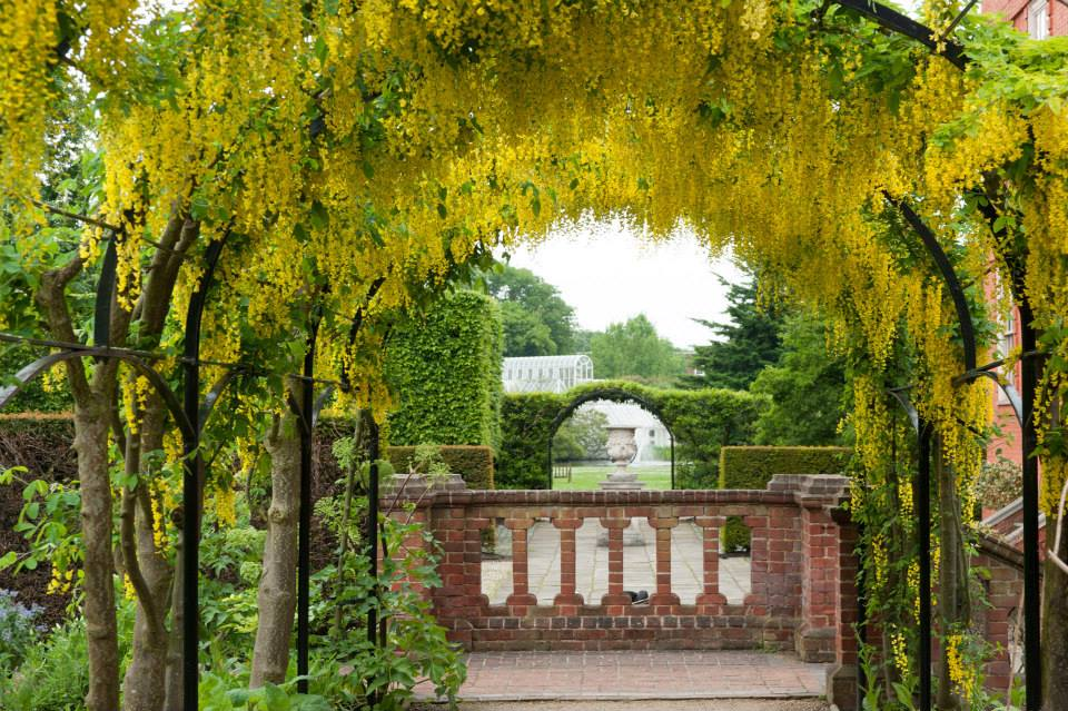 From Kew's facebook: The laburnum arch